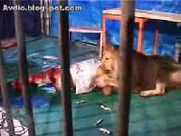 吃人的獅子 - Lion Eat Man