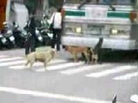 狗兒街頭3P出現在台中街頭 ncut dog 3P