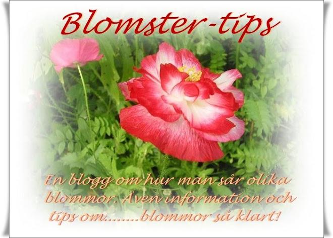 Blomster-tips