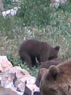 Αρκουδάκια 3