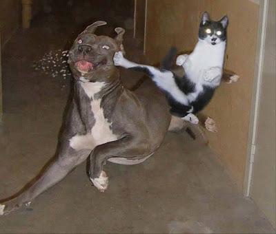 El gato de Chuck Norris