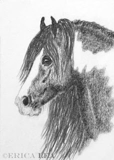 gypsy vanner horse drawing
