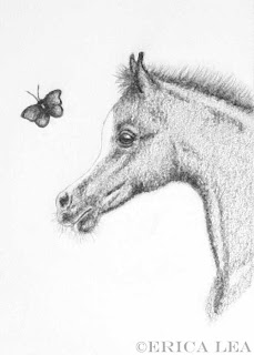 arabian foal, drawing