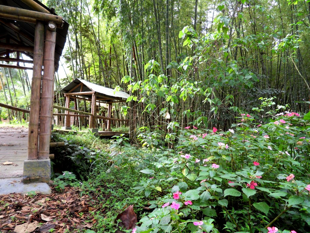 flores y paisajes Cuidar de tus plantas es facilisimo com - Fotos De Paisajes Llenos De Flores
