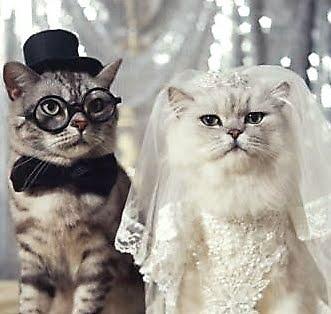 Catsparella planning your dream cat wedding planning your dream cat wedding junglespirit Images