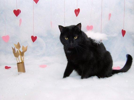 Catsparella The Catsparella Guide To Cat Valentine S Day Cards