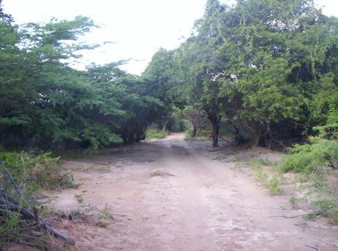 El anciano bosque de Ipapure