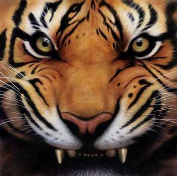 Tiger%2bgrowl