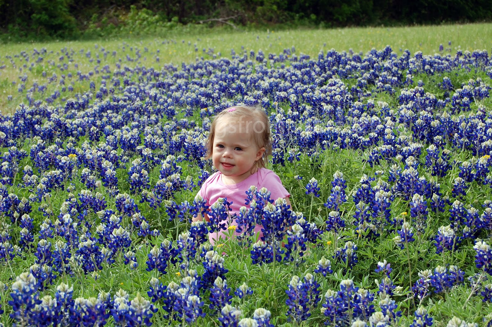 Bluebonnets Texas Hill Country Sunset | 2017 - 2018 Best Cars Reviews