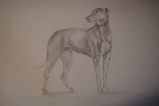pencil drawing of dog