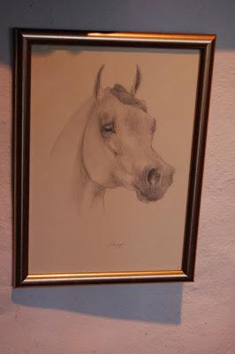 ophelia keys arabian horse head study
