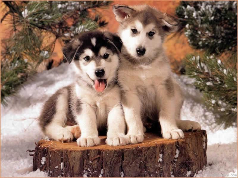 wallpaper cute dogs. wallpaper cute dogs.