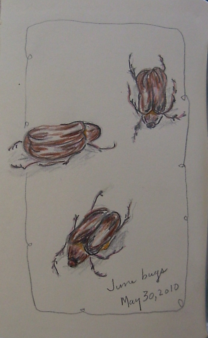 June Bug Drawing Drawing of a j June Bug