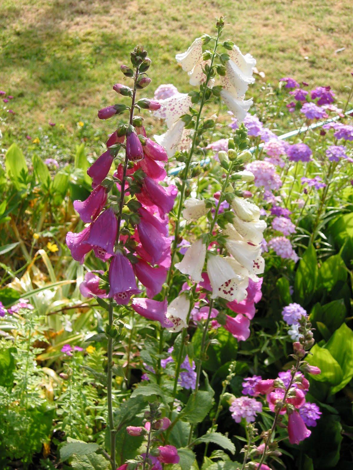 Photo Journal More Bloomin 39 Garden