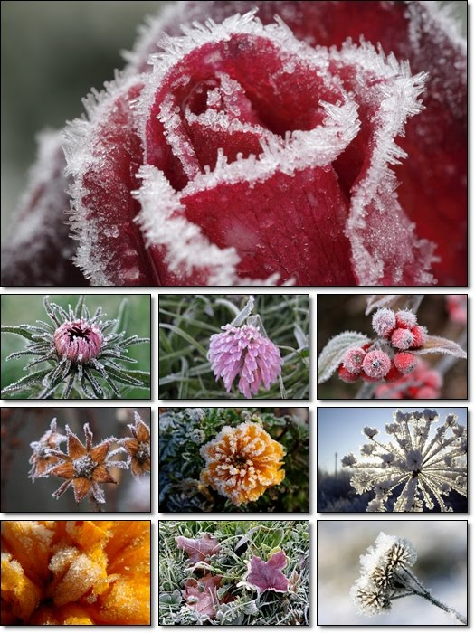 Plants in Hoarfrost Wallpaper