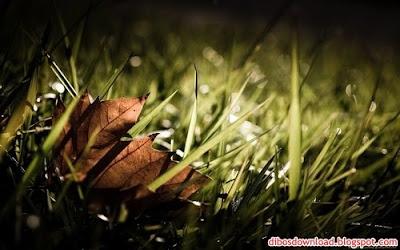 Widescreen Leaf