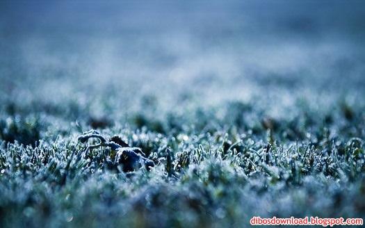 fallen dew grass