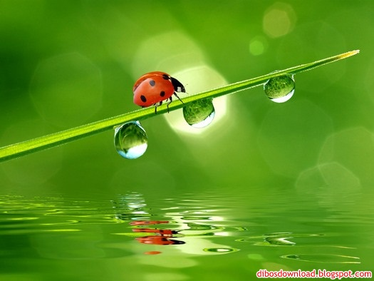 ladybird walking branch