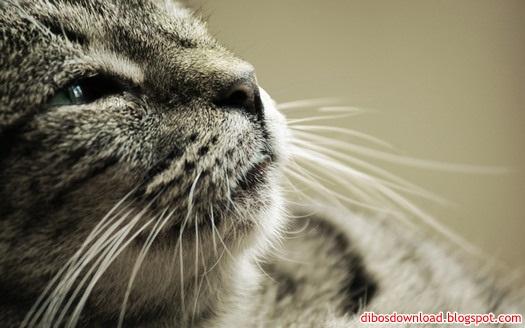 white mustache cat