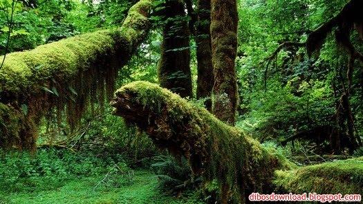 trees had moss