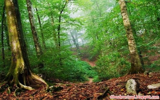 wallpaper green forest. Forest Wallpapers Pack 2 Size: