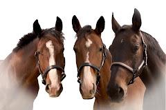 Die Pferde auf unserer Ranch in Hollabrunn