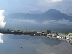 Mt. Apo