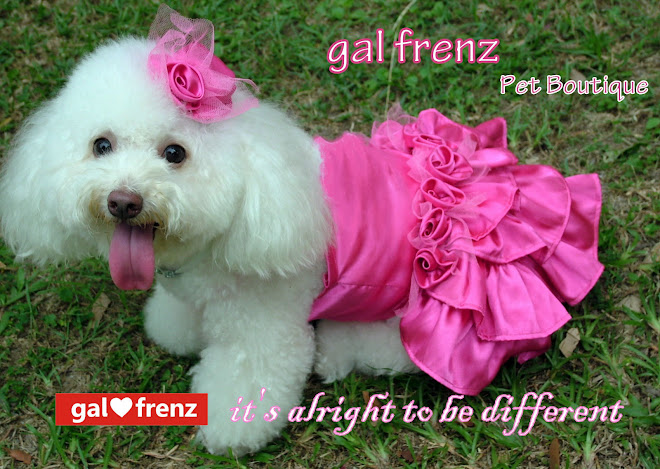 gal frenz the pet boutique
