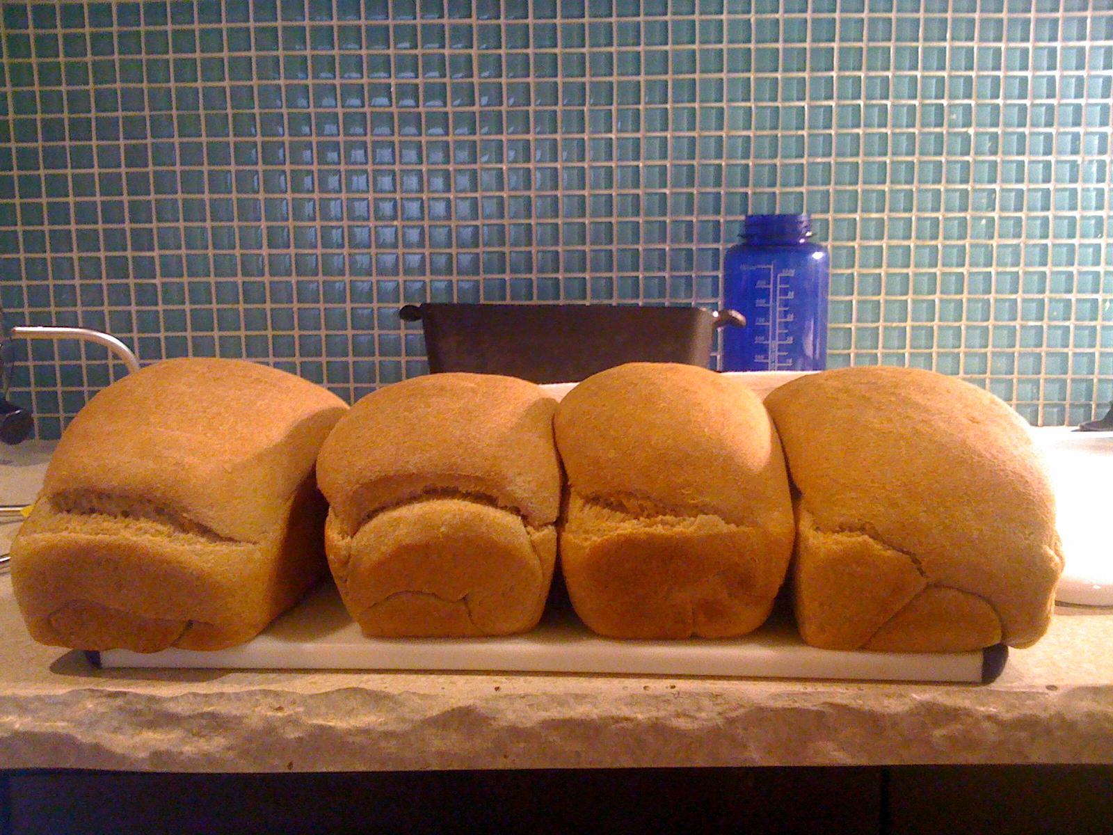 Gorgeous WW Sourdough loaves