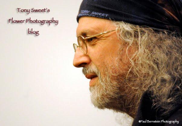 Tony Sweet Flower Photography blog