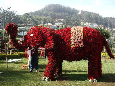Ooty Rose show elephant photo