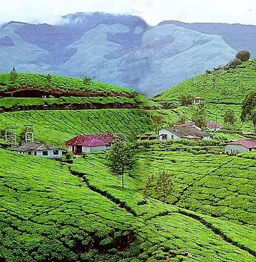 Hill Station Munnar - Kerala