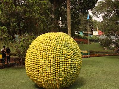 Fruit Show Photo