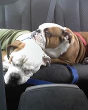 Daisy and Dozer