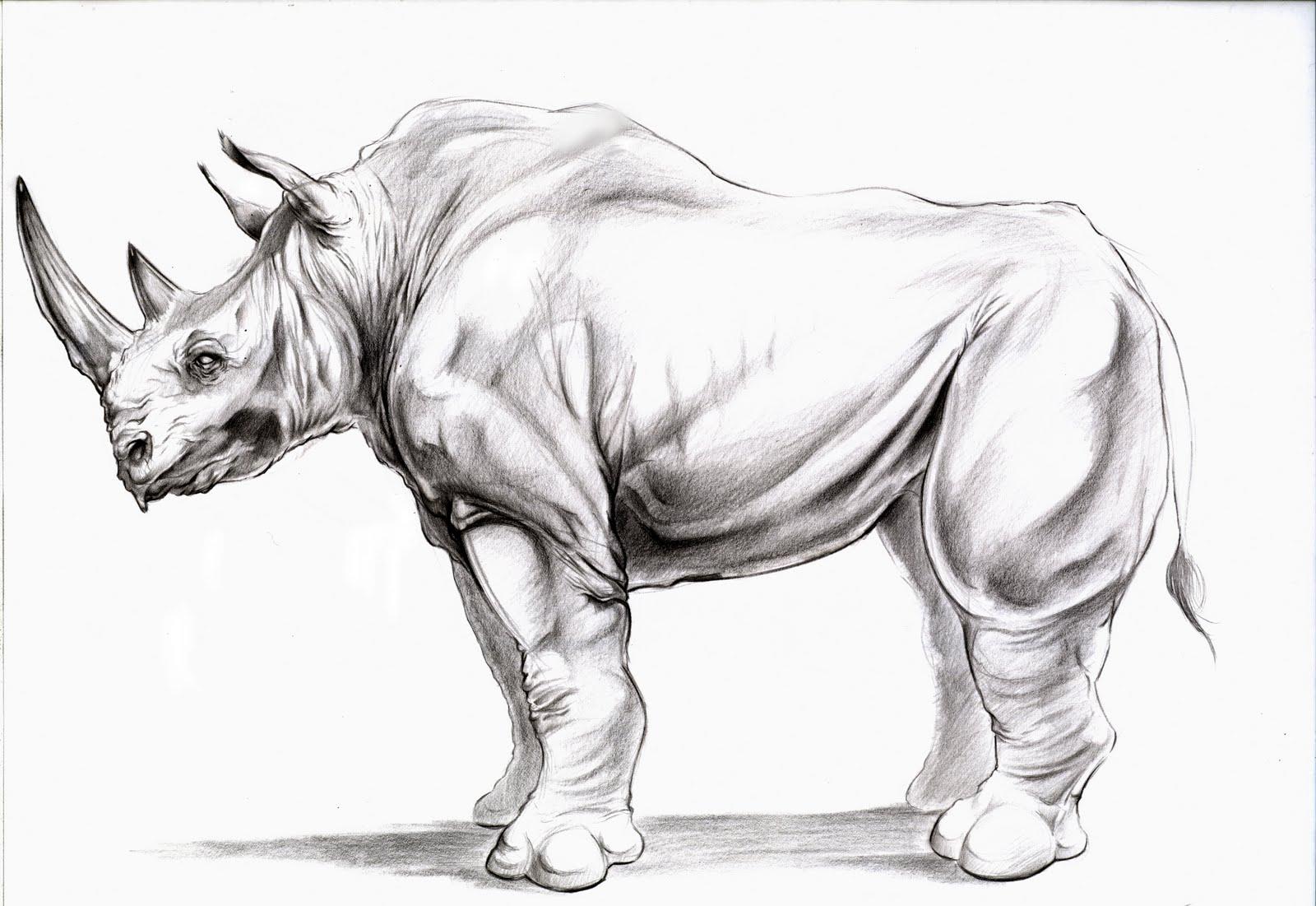 Rhino Fan Art - Fan Art - Warframe Forums