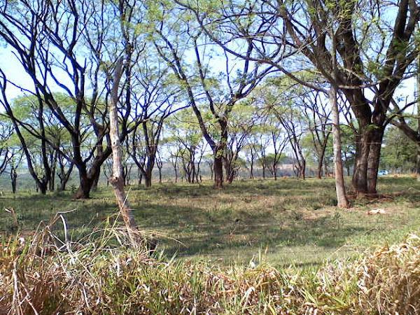 Pasto com Árvores