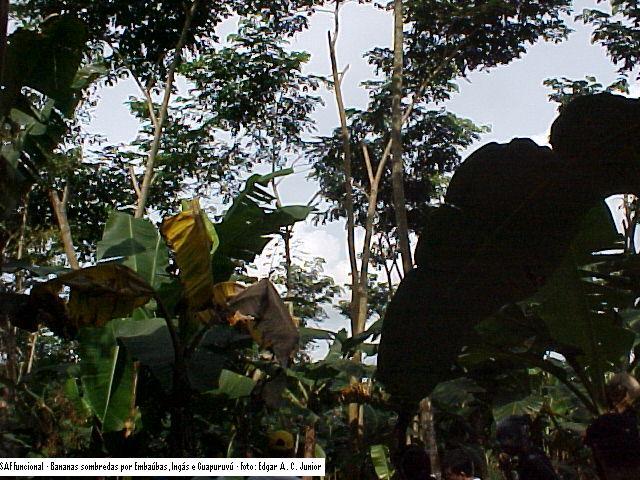 Agrofloresta Funcional