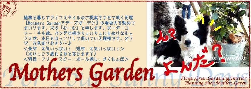 【Mothers Gardenマザーズガーデン】看板犬むーむの<br>「わんことおさんぽ¥0円!」