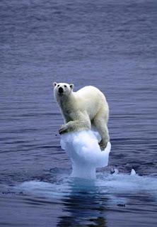 Polar bear resting on a piece of melting iceberg is by Norwegian wildlife photographer Arne Navaera.