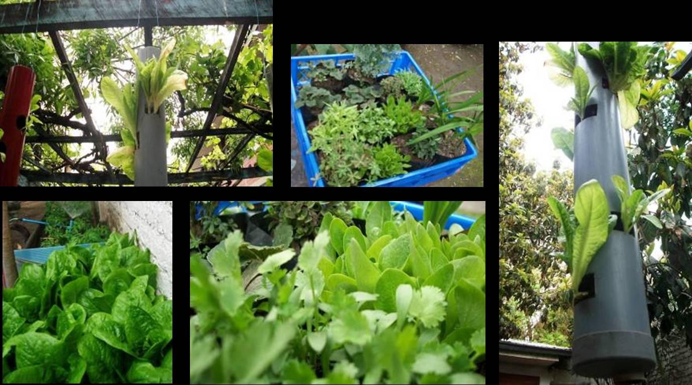 Paisajismo creativo charla practica cultivos verticales for Cultivos verticales definicion