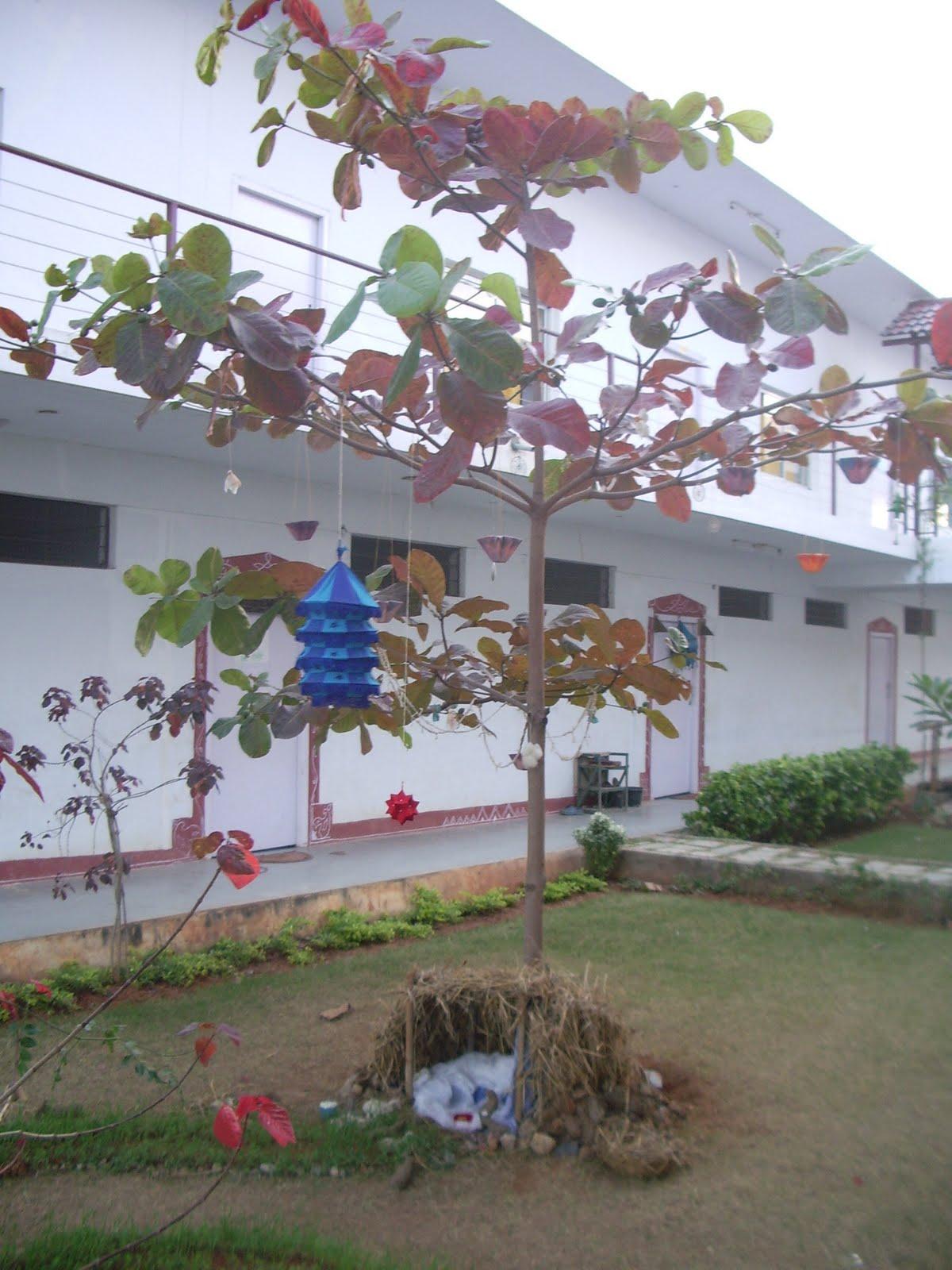 freiwilligen dienst in indien indische weihnachten und mehr. Black Bedroom Furniture Sets. Home Design Ideas