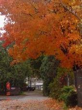 October in Vermont 2007