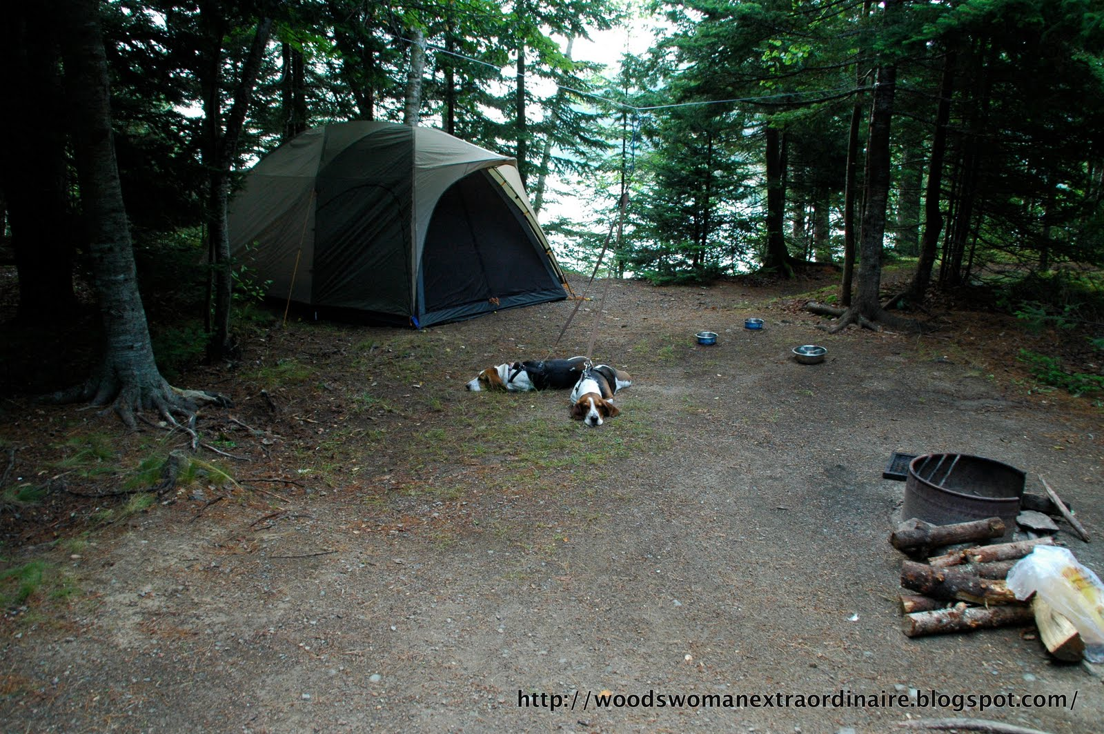 To me Cobscook Bay State Park is sort of cheater c&ing. Being only 1/8 mile from our car means we get to take the big LL Bean tent with its attached ... & Cobscook Bay State Park | Woodswoman Extraordinaire