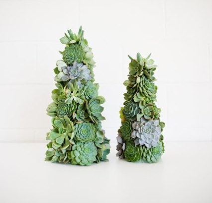 Room For Dessert Food Party Style A Succulent Christmas