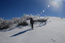 Among the Ice Trees