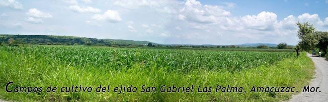 Campos de cultivo del Ejido de San Gabriel Las Palmas