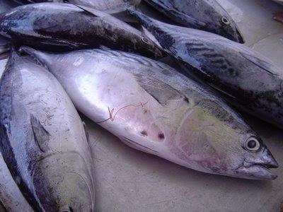 ikan hanyir