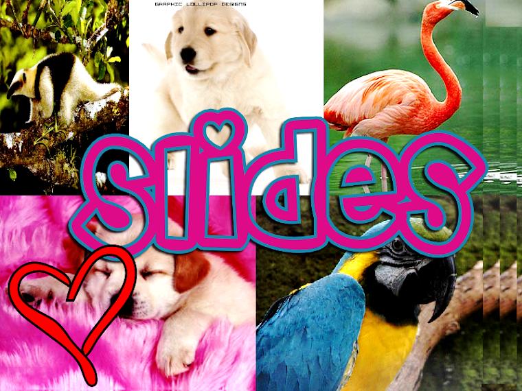 Mundo animal slide
