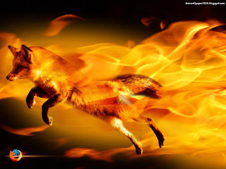 Fire Fox photo