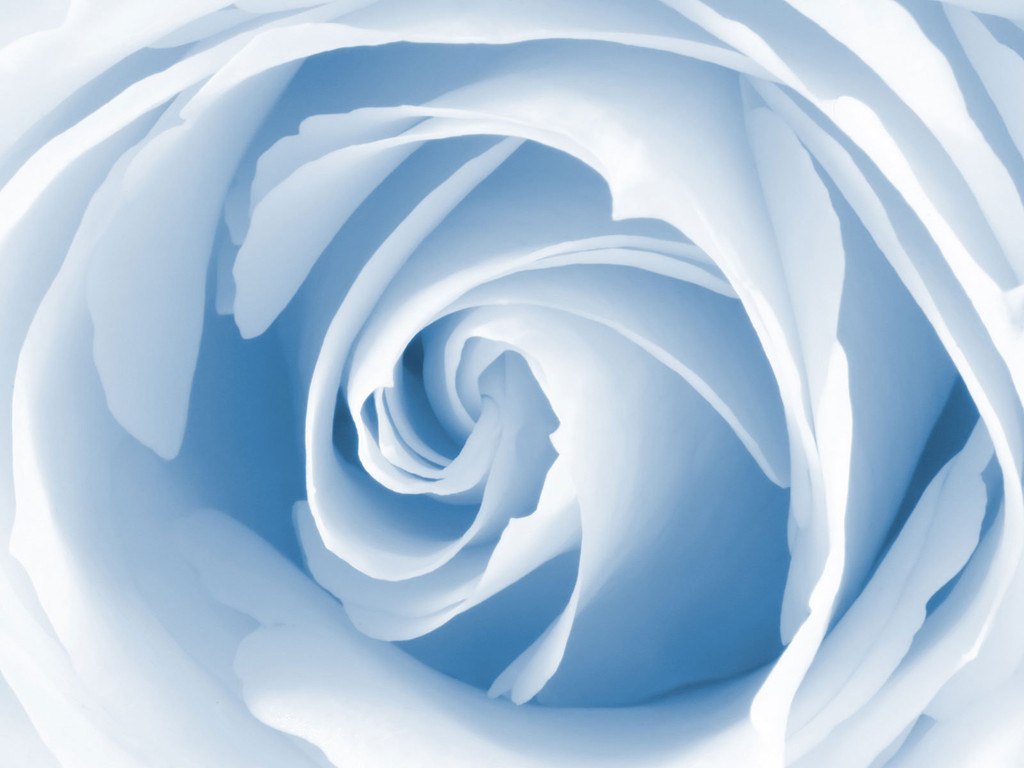 http://2.bp.blogspot.com/_Ym3du2sG3R4/S7eS-e9vt7I/AAAAAAAAB6M/c6ETMchJaoI/s1600/blue_rose_wallpaper.jpg